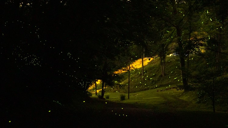 A composite photograph shows 90 seconds of lightning bug flashes at Molly Branch Fireflies in Corryton.