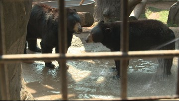 Find out which Zoo Knoxville animals are on Santa's naughty and nice list this year