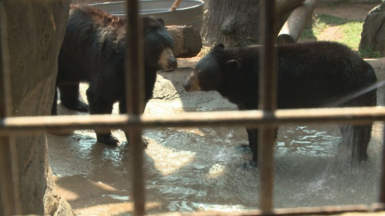 Zoo Knoxville keeping cool
