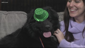 Get ready to parade your pooch in Mardi Growl