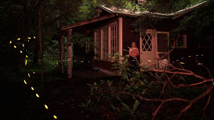 Lynn Faust watches synchronous fireflies in 2010 beside her family's former cabin in Elkmont.