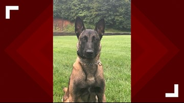 K9 injured while pursuing robbery suspect will return to duty
