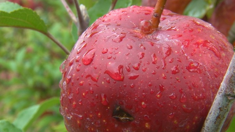 Local orchard owner said crops took a hit after the late spring freeze