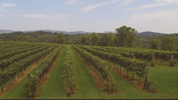 Wine week: From farm to bottle