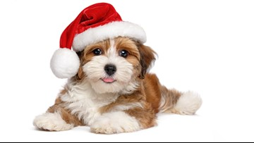 BBB warns of puppy scams this holiday season