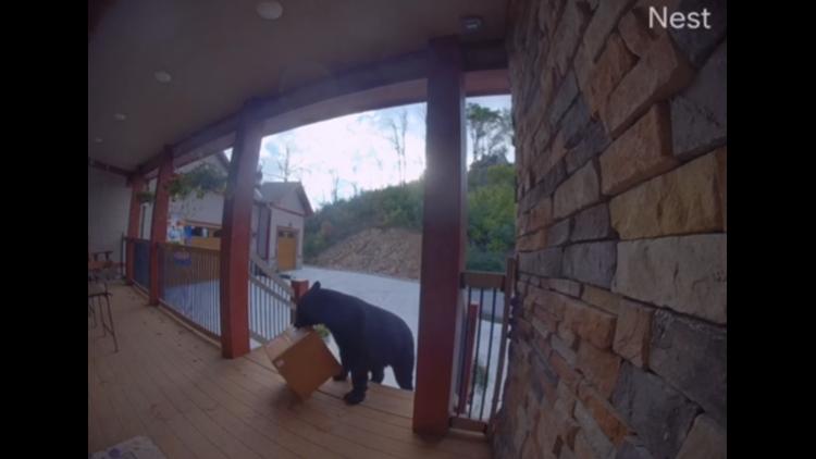 Crafty bear steals package off Gatlinburg porch