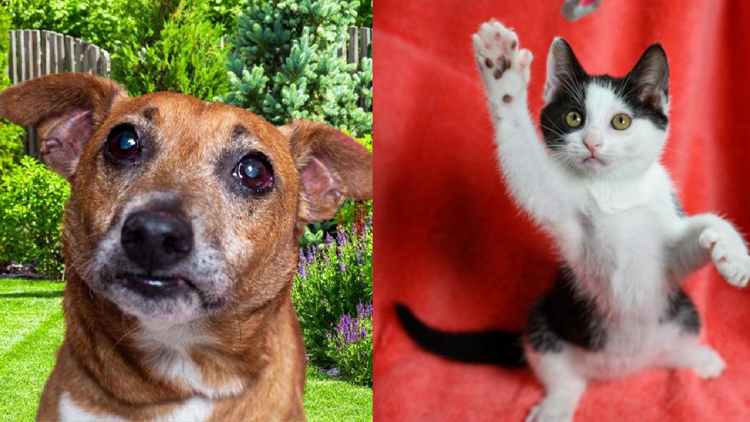 YWAC reducing pet adoption fees through Sunday as part of 'Empty the Shelters'