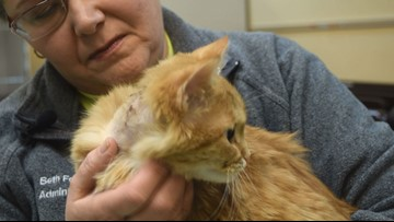 Are you allergic to cats? You can still adopt one