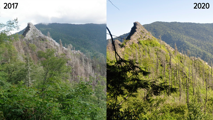 New photos show growth, recovery on Chimney Tops after 2016 wildfires