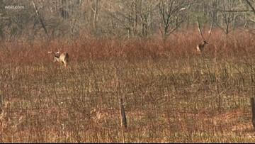 Ten West TN deer test positive for Chronic Wasting Disease in prelim tests, TWRA enacts response plan