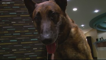 He's a very good boy! Meet the now-retired K-9 who protected and loved Knoxville patients