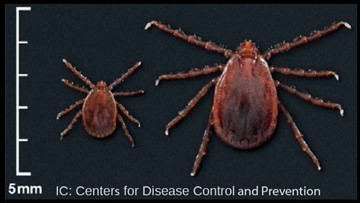 Invasive Asian longhorned tick confirmed in Knox County