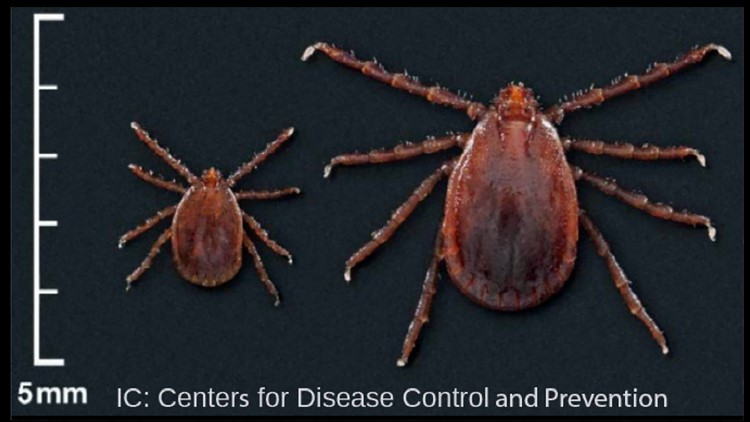 Asian Longhorned Tick Centers for Disease Control and Prevention
