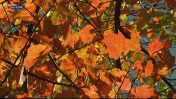Forestry professor predicts subdued fall colors in Smokies