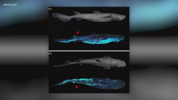 In Other News: Glow in the dark sharks, Signs of burnout & Liking coworkers