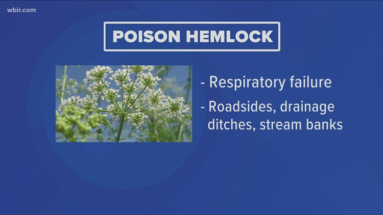 Poisonous plants in Tennessee to watch out for