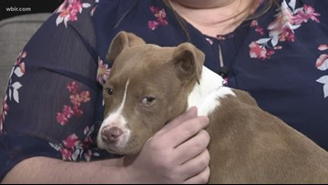 Pet of the Week: Artemis
