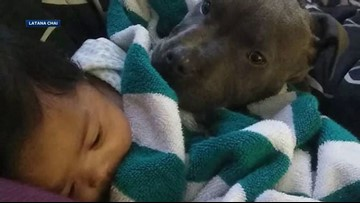 Pit bull rescues family, pulls baby from raging fire