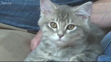'It's spot on!' N.C. family successfully clones pet cat