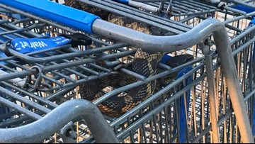 Texas police officer finds snake in Walmart shopping cart