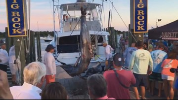 Record-breaking 914-pound marlin caught at NC tournament