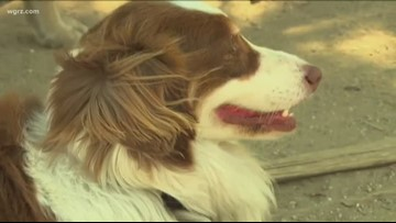 It's not just us: Keep your eye on pets in the heat