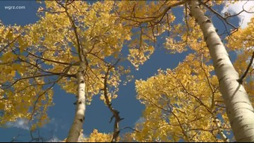 City crews prepare to switch to leaf collection season