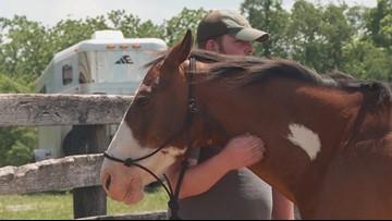 Kentucky veterans use horses for mental healing