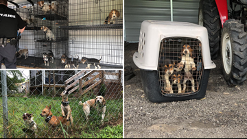 Breeder charged after 30 dogs riddled with diseases, injuries rescued from SC home