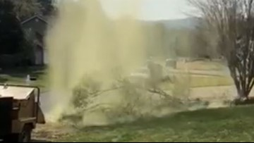 VIDEO: Massive pollen cloud rises from fallen tree