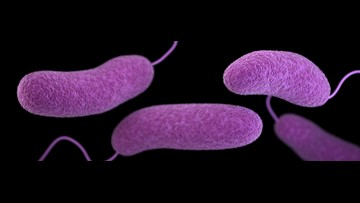 """""""Flesh-eating"""" bacteria may rise on some East Coast beaches, new study says"""