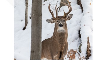 Former Michigan lawmaker takes picture of rare 3-antler deer in the U.P.